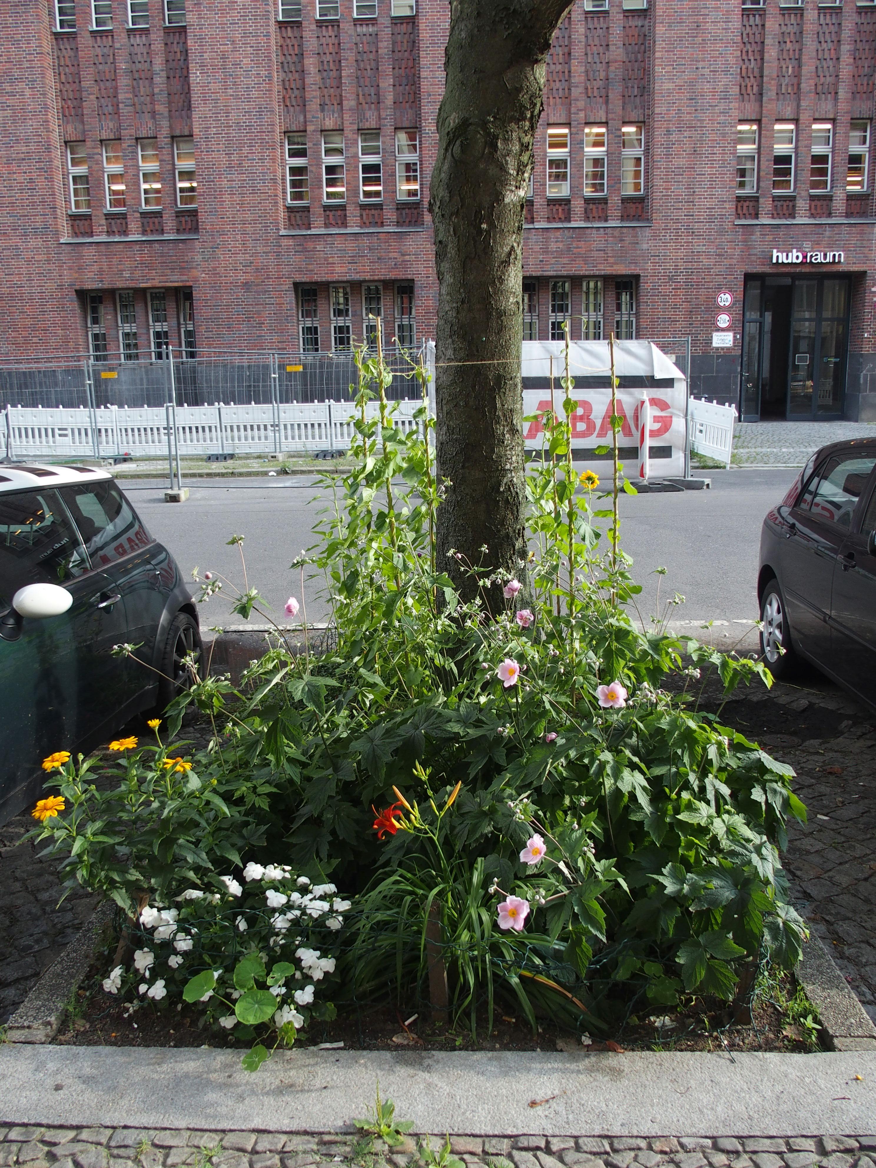Baumscheibe zwischen parkenden Autos